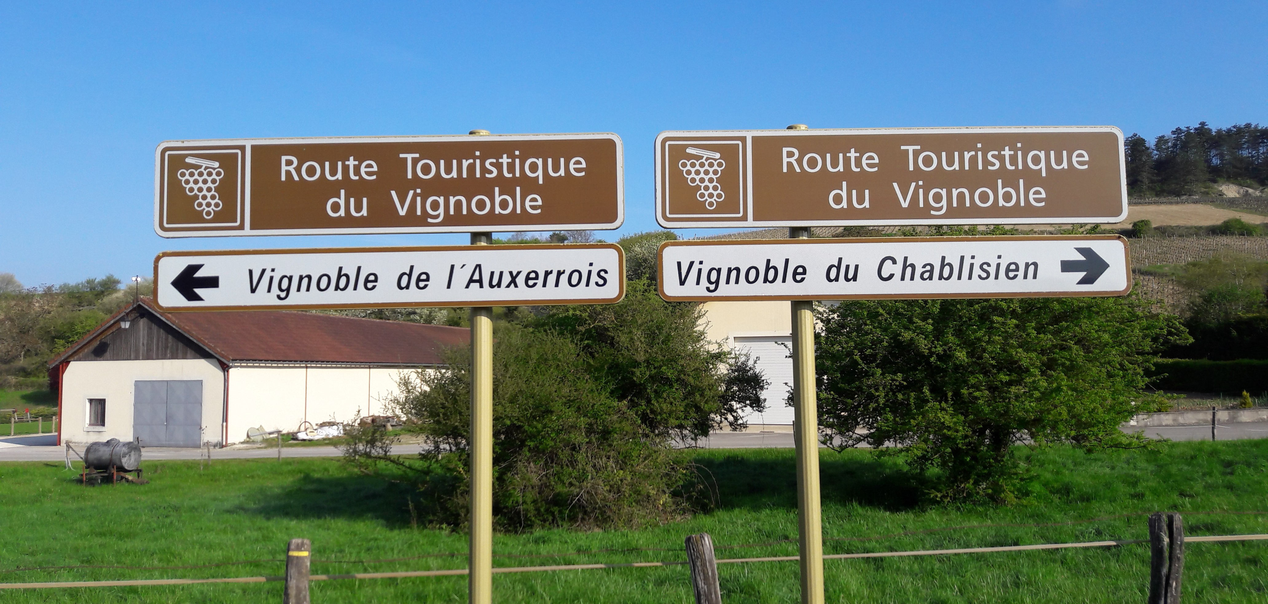 Kiezen geblazen in Chitry (Wijn uit Bourgogne)