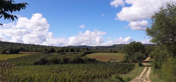 De Côte Chalonnaise ten zuiden van Mellecey (Wijn uit Bourgogne)