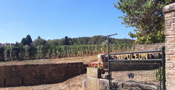 'Clos Napoléon' in Fixin (Wijn uit Bourgogne)