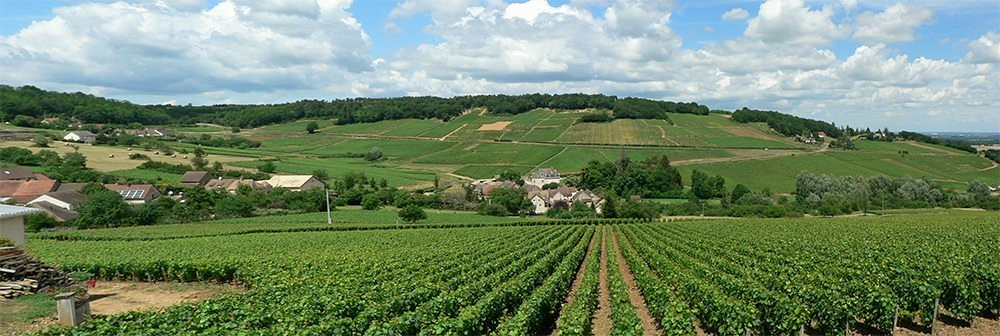 Wijn uit Bourgogne