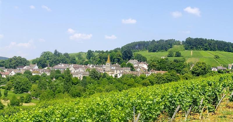 Pernand-Vergelesses (Wijn uit Bourgogne)