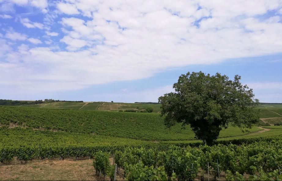 Chablis 2020 (Wijn uit Bourgogne)