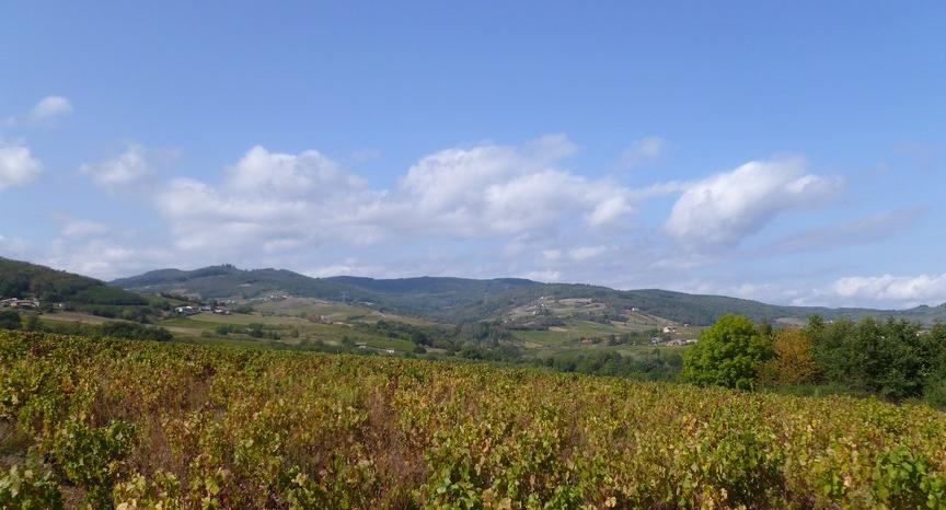 Beaujolais (Wijn uit Bourgogne)