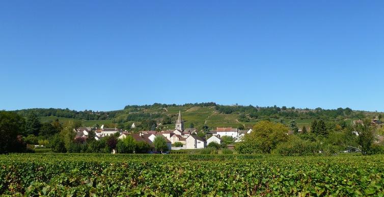 Saint-Martin-sous-Montaigu (Wijn uit Bourgogne)