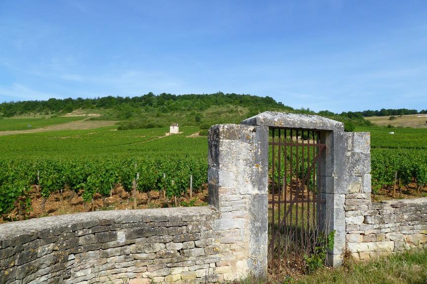 Givry (Wijn uit Bourgogne)