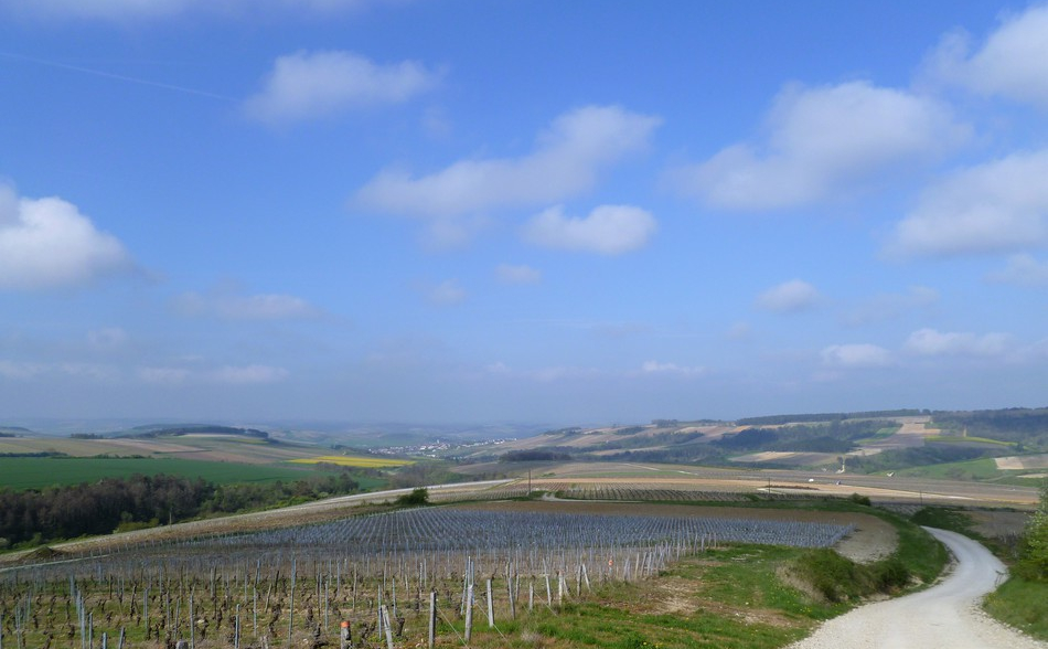 Chitry (Wijn uit Bourgogne)