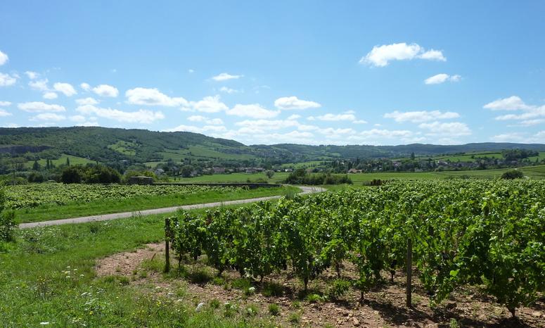 La Vallée des Vaux in de Côte Chalonnaise (Wijn uit Bourgogne)
