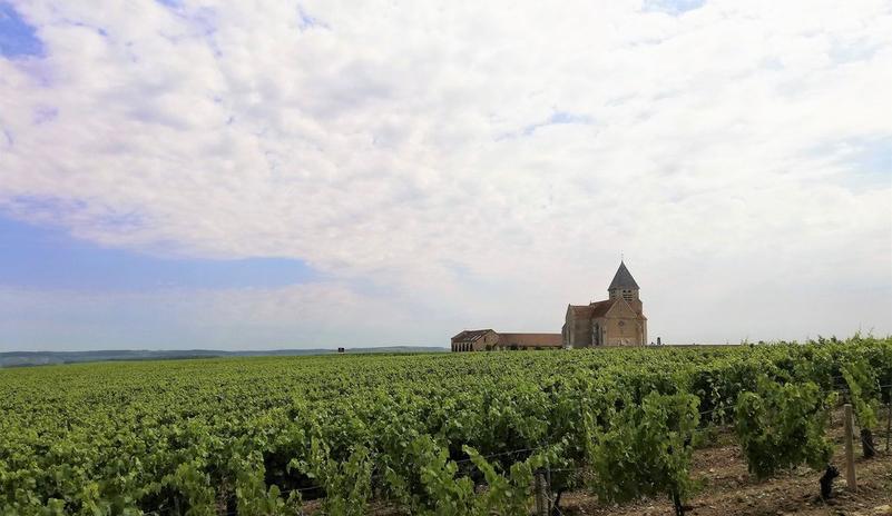 Domaine Jean-Marc Brocard (Wijn uit Bourgogne)