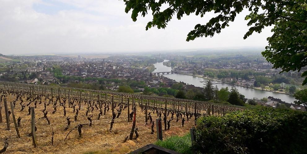 Côte Saint Jacques in Joigny (Wijn uit Bourgogne)