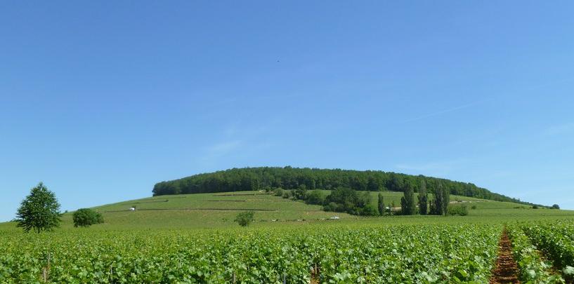 Corton in Aloxe-Corton (Wijn uit Bourgogne)