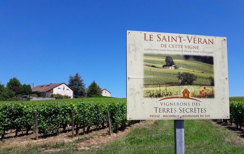 Saint-Véran (Wijn uit Bourgogne)