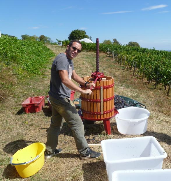 Wijnoogst op kleine schaal (WIjn uit Bourgogne)