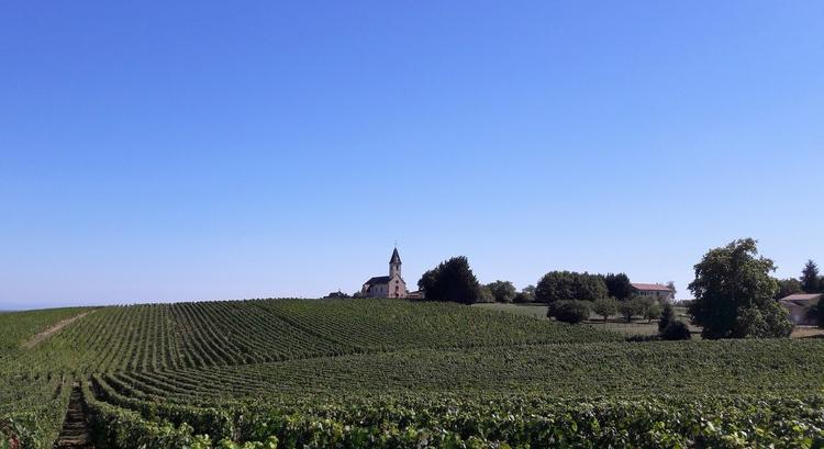Quintaine Viré-Clessé (Wijn uit Bourgogne)