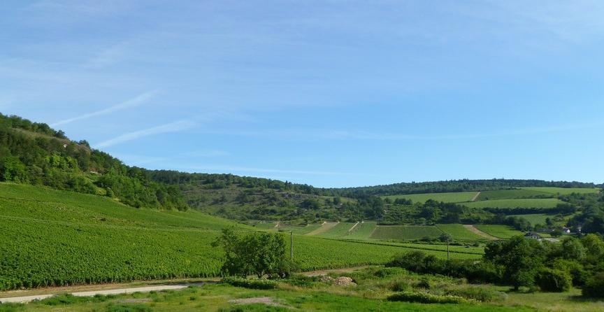 Saint-Aubin (Wijn uit Bourgogne)