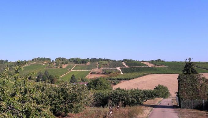 Coulanges-la-Vineuse (Wijn uit Bourgogne)