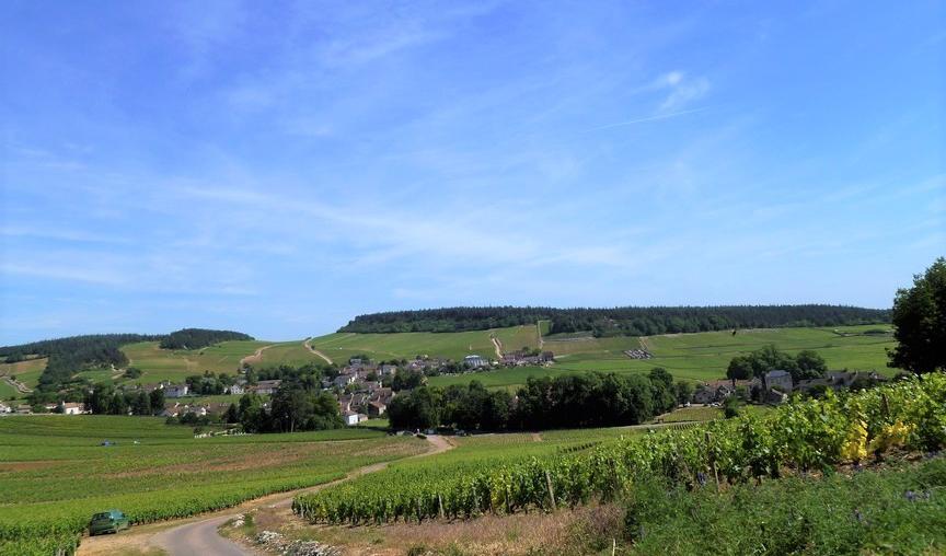 Mercurey (Wijn uit Bourgogne)