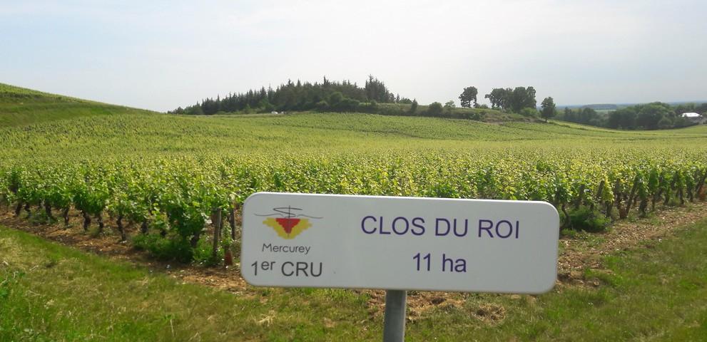 Clos du Roi in Mercurey (Wijn uit Bourgogne)