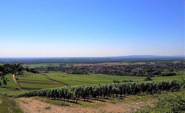 Givry in de Côte Chalonnaise (Wijn uit Bourgogne)