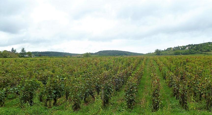 Beaune (Wijn uit Bourgogne)